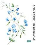 Sweet Peas  Watercolor  Flowers ...
