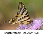 Scarce Swallowtail Or Pear Tre...