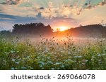 Blooming Meadow Grass In The...