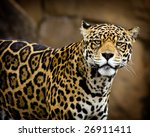 Portrait of a Jaguar - stock photo