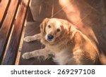 portrait of a beautiful dog  ... | Shutterstock . vector #269297108