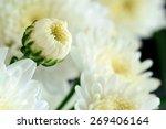 white flower bud | Shutterstock . vector #269406164