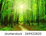 sun beam in a green forest | Shutterstock . vector #269422820