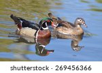 Male And Female Wood Duck...