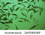 fish in clear water at natural... | Shutterstock . vector #269589389