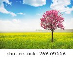pink tree in yellow field and... | Shutterstock . vector #269599556