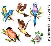 birds watercolor on branches...   Shutterstock .eps vector #269614643