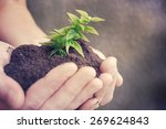 hand and plant | Shutterstock . vector #269624843