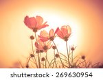 sunset color tone of soft focus ... | Shutterstock . vector #269630954