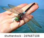Dragonfly On A Female Palm...
