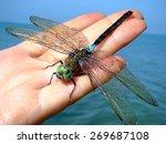 Dragonfly On A Female Palm...