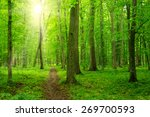 sun beam in a green forest | Shutterstock . vector #269700593