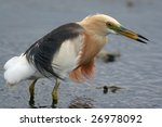 egret in water | Shutterstock . vector #26978092