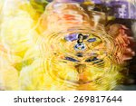 colorful flower of water... | Shutterstock . vector #269817644