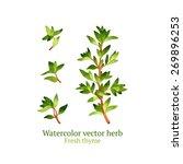 watercolor vector thyme | Shutterstock .eps vector #269896253