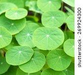 green leaves background | Shutterstock . vector #269924300