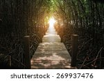 The Forest Mangrove At...