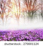 saffron geyfelya first... | Shutterstock . vector #270001124