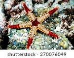 fromia monilis starfish... | Shutterstock . vector #270076049