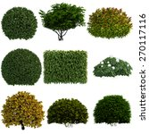 plant isolated collection | Shutterstock . vector #270117116