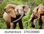faithing african elephants | Shutterstock . vector #270130880