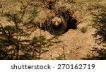 a brown bear in the forest. big ... | Shutterstock . vector #270162719