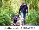 Stock photo man exercising dogs on countryside walk 270164993