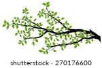 tree branch with green leaves... | Shutterstock .eps vector #270176600