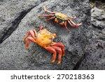 Zayapas Crabs Abound On The...