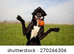 Stock photo silly black dog trying to catch orange ball 270266306