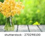 Spring  Daffodil  Flower.