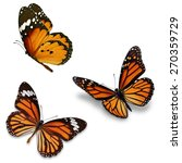Stock photo three monarch butterfly isolated on white background 270359729