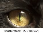 Macro shoot of black cat eye...