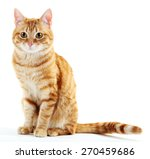 Portrait Of Red Cat Isolated O...