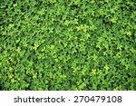 green leaf of arachis pintoi ... | Shutterstock . vector #270479108