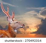 head of sika deer  cervus... | Shutterstock . vector #270492314