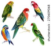 set of birds parrots.... | Shutterstock . vector #270609068