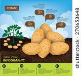 potato   infographics....   Shutterstock .eps vector #270653648