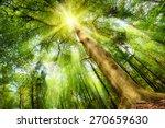 magical mood in a fresh green... | Shutterstock . vector #270659630