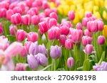 tulip. beautiful bouquet of...   Shutterstock . vector #270698198