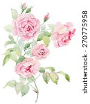 Watercolor Painting  Pink Rose...