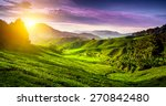 tea plantation in cameron... | Shutterstock . vector #270842480