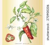 vector hand drawn botanical... | Shutterstock .eps vector #270900206