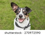 Stock photo happy dog smiles outside 270972590