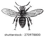 Worker Bee  Vintage Engraved...