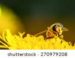 Bee Collecting Pollen On A...