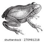frog  vintage engraved... | Shutterstock .eps vector #270981218
