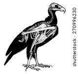 Vulture Skeleton  Vintage...