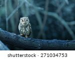 Stock photo lovely oriental scops owl thailand 271034753