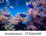 coral reef fishes in the water | Shutterstock . vector #271062440